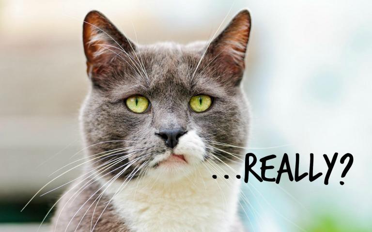 annoyed-cat.jpg